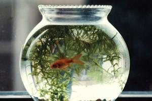 Vissenkom van een dierenwinkel